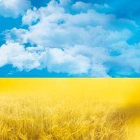 Світлана Шевченко