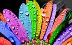 rainbow world from nyusha
