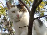 Мастерская Пятнистый кот