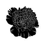 Black Peony Lingerie