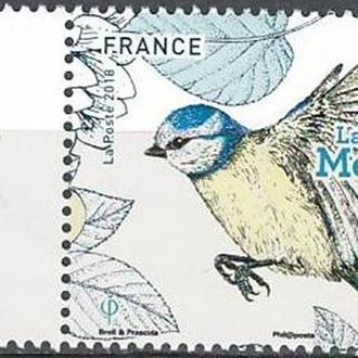 фауна Франция-2018 птица