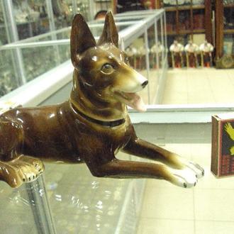 германия собака собачка №1