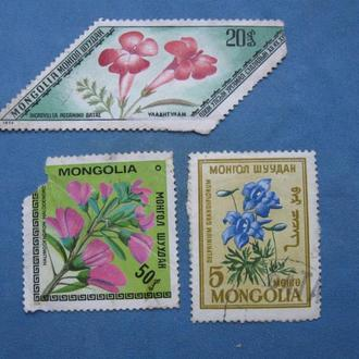 Монголия Флора, Цветы