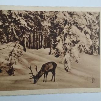 Открытка Зимний лес Сердечное Рождественское приветствие ODN 2082 Германия