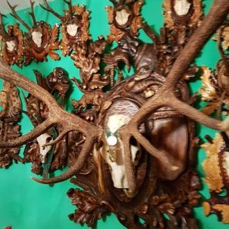 Колекція рогів