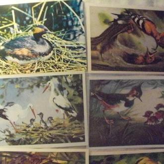 СССР открытка птицы 4 шт.