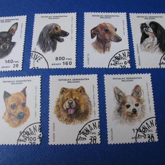 Фауна Собаки Мадагаскар 1991