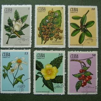 флора экзотические цветы серия