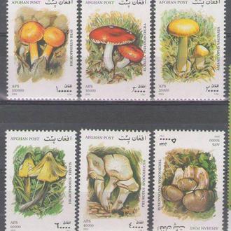 Афганистан 2001 грибы