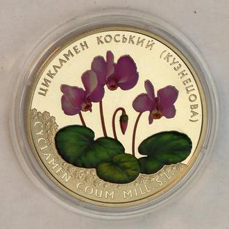 Цикламен коський, косский Кузнецова - 2014