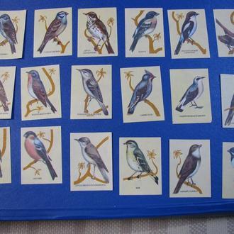 Фауна Птахи Етикетки від сірників Птицы Спичечные этикетки для спичек Наклейки 18 шт