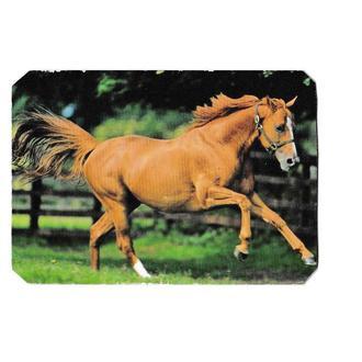 Календарик 2009 Фауна, лошадь