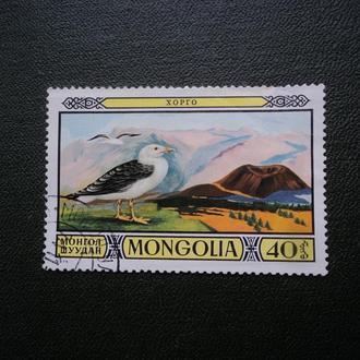Монголия. Птицы.