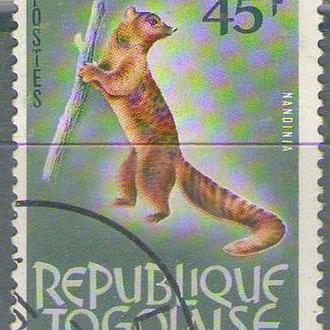 Того 1964 виверра СТО