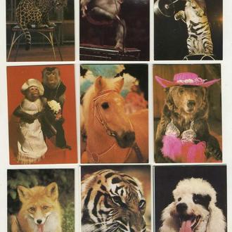 Карманные календарики Цирк 9 шт. (№12)