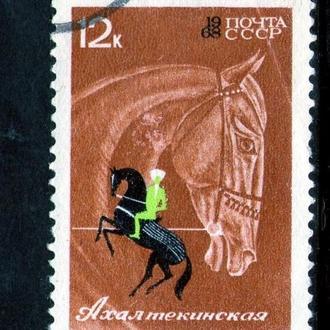 SS 1968 г. Коневодство и конный спорт. Ахалтекинская лошадь (Гашеная) (*)