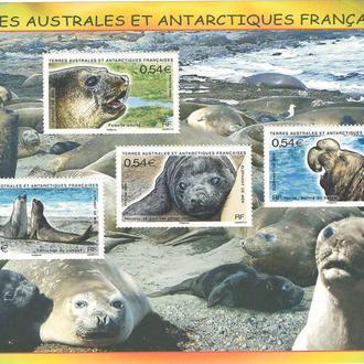 фауна ТААФ-2008 животный мир Антарктики