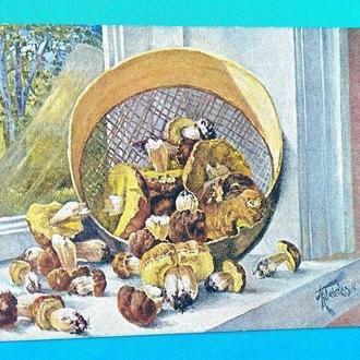 Старинная открытка Ковальская. Боровики.. 1930-е гг