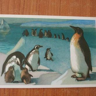 СССР,Пингвины
