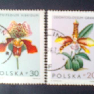 Польша 1965г  Орхидеи
