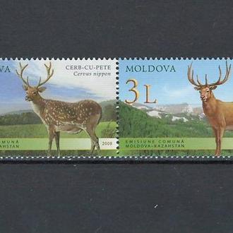 фауна Молдова-2008 олени