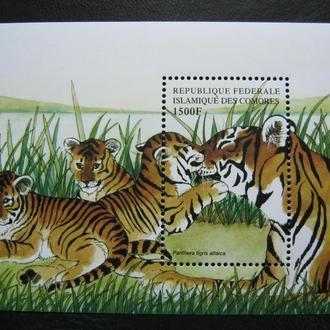 фауна кошки тигр коморы  на  т