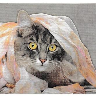 Календарик 2000 Кошка, Мэйн Кун, №8 из серии Кошки Мира
