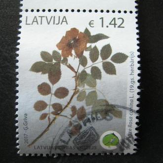латвия флора цветы т
