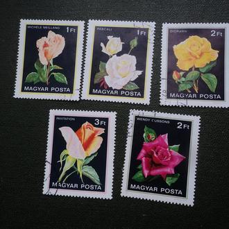 Венгрия. Флора. Цветы. Розы.