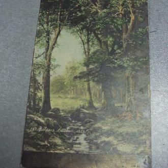 открытка  фарбах дубовый лес №1375