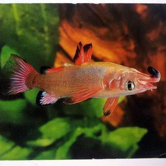 ГДР 1985 фауна рыба
