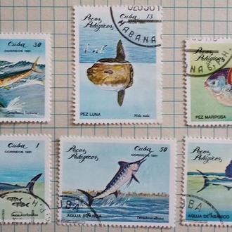 Куба 1981г. Морские рыбы