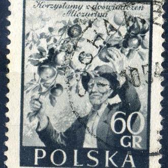 Польша.  Мичурин 1954 г.