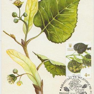 Картмаксимум Лікарські рослини - Липа серцелиста
