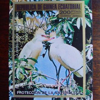 Экваториальная Гвинея.1973г. Фауна. Птицы. Почтовый блок.