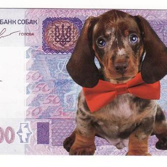 1000000 миллион гривен год собаки 2018 банкнота -календарь новинка