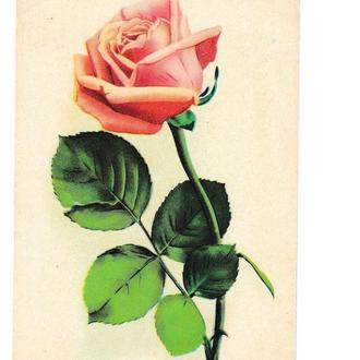Открытка 1969 Цветы, Роза, Эстония, Союзпечать Филателия