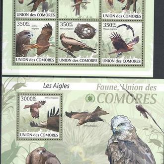 фауна Коморские о-ва-2009 хищные птицы