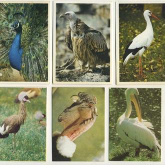 Карманные календарики Животные Птицы 6 шт. (№6)