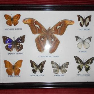 2..набір метеликів