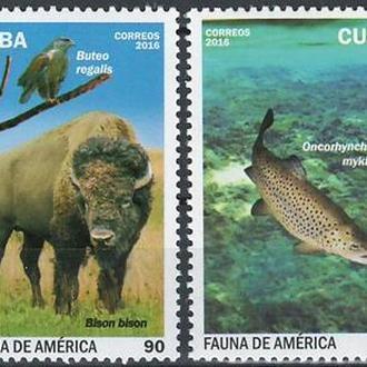 фауна Куба-2016 животные Америки