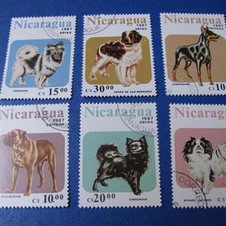 Фауна Собаки Нікарагуа Никарагуа 1987