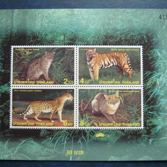 фауна кошки  тигры таиланд Т