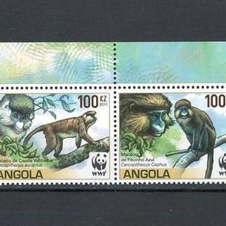 фауна Ангола-2011 wwf, мартышки (верхнее поле)