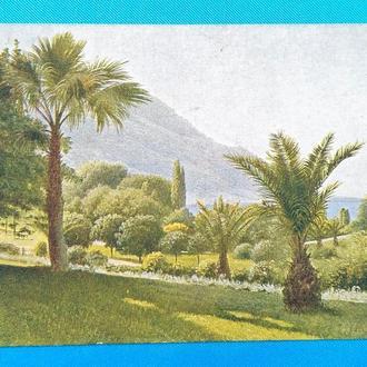 Старинная открытка Кондратенко. Финиковые пальмы. 1930-е гг