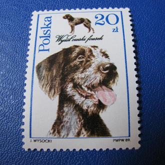 Фауна Собаки Польща Польша