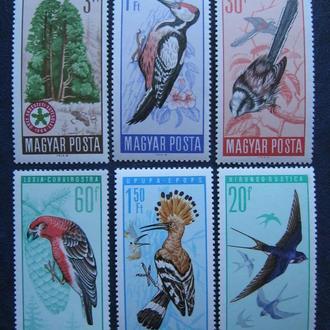 птицы фауна венгрия  т