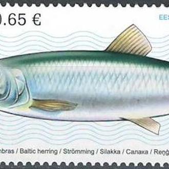 фауна Эстония-2017 рыба
