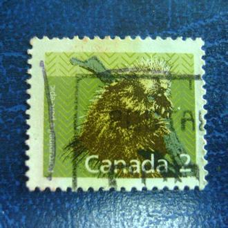Канада. Северный Американский Дикобраз (Erethizon dorsatum)