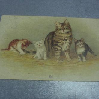 открытка кошка с котятами с.петербург 1903 №1617
